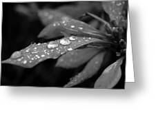 Black And White Dewy Petals Greeting Card
