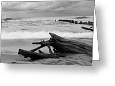 Black And White Driftwood At Whitefish Point Greeting Card