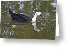 Black And White Duck Reflections Greeting Card