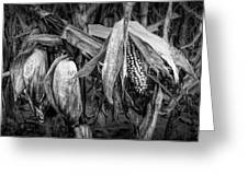 Black And White Ear Of Corn On The Stalk Greeting Card