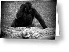 Black And White Gorilla Greeting Card