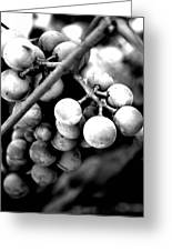 Black And White Grapes Greeting Card