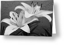 Black And White Lilies 1 Greeting Card