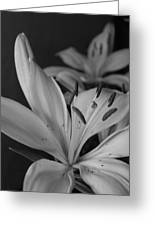 Black And White Lilies 2 Greeting Card