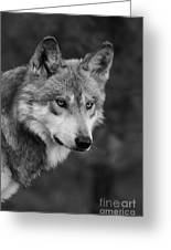 Black And White Mexican Wolf #4 Greeting Card