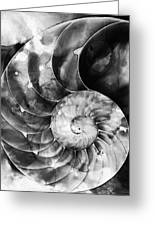 Black And White Nautilus Shell By Sharon Cummings Greeting Card