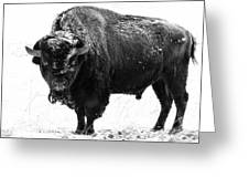 Black And White Of A Massive Bison Bull In The Snow  Greeting Card