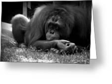 Black And White Orangutang Greeting Card