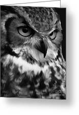 Black And White Owl Painting Greeting Card