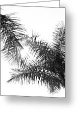 Black And White Palm Trees Greeting Card
