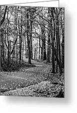 Black And White Path In Autumn  Greeting Card
