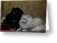 Black And White Persians Greeting Card