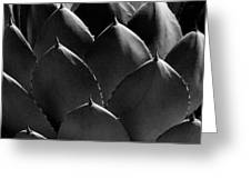 Black And White Photographic Detail Of California Cabbage Cactus Agave Greeting Card