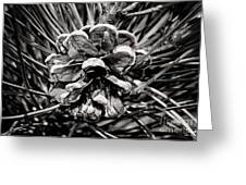 Black And White Pine Cone Wall Art Greeting Card