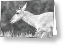 Black And White Pronghorn Portrait Greeting Card