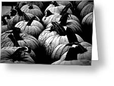 Black And White Pumpkins Greeting Card