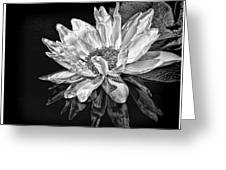 Black And White Reflection Greeting Card