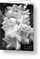 Black And White Rhododendron Greeting Card