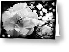 Black And White Rose Of Sharon Greeting Card by Eva Thomas