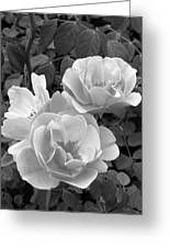 Black And White Roses 1 Greeting Card