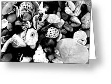 Black And White Seashells Greeting Card by Kimberly Perry