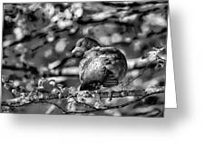 Black And White Shy Greeting Card