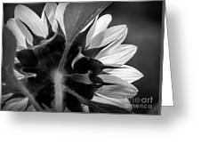 Black And White Sinflower 6 Greeting Card