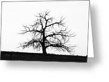 Black And White Single Tree Greeting Card