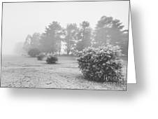 Black And White Snow Landscape Greeting Card