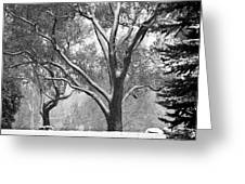 Black And White Snowy Landscape Greeting Card