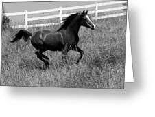 Black And White Steed Greeting Card