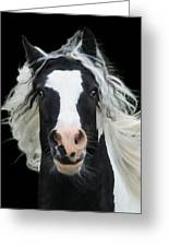Black And White Study Vi Greeting Card by Terry Kirkland Cook