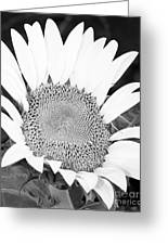 Black And White Sunflower Face Greeting Card