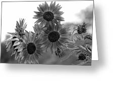 Black And White Sunflowers Greeting Card