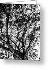 Black And White Tree 2 Greeting Card