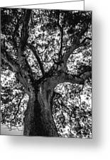 Black And White Tree 4 Greeting Card