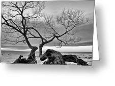 Black And White Tree  Greeting Card