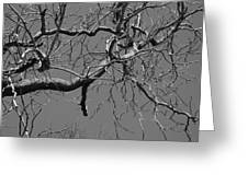 Black And White Tree Branch Greeting Card