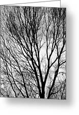 Black And White Tree Branches Silhouette Greeting Card