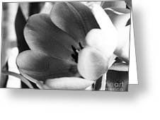 Black And White Tulips #1 Greeting Card