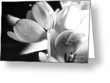 Black And White Tulips #4 Greeting Card
