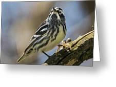 Black And White Warbler Greeting Card