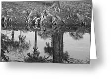 Black And White Water Reflections Greeting Card