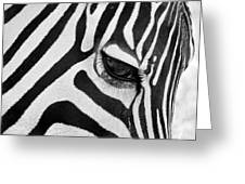 Black And White Zebra Close Up Greeting Card