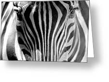 Black And White Zebra  Greeting Card