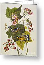 Black And Yellow Warbler Greeting Card by John James Audubon