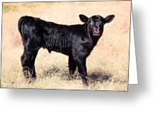 Black Angus Baby Calf Greeting Card