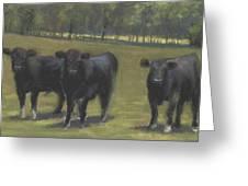 Black Angus Buddies Greeting Card
