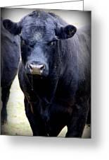 Black Angus Bull Greeting Card by Tam Graff