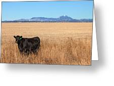 Black Angus Looking Greeting Card